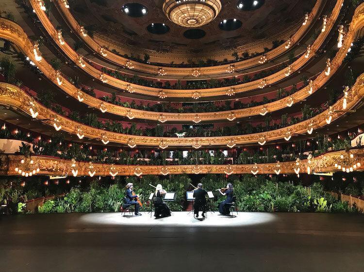 کنسرت گیاهان ؛ خانه اپرای بارسلونا با یک کنسرت برای 2292 گیاه افتتاح شد