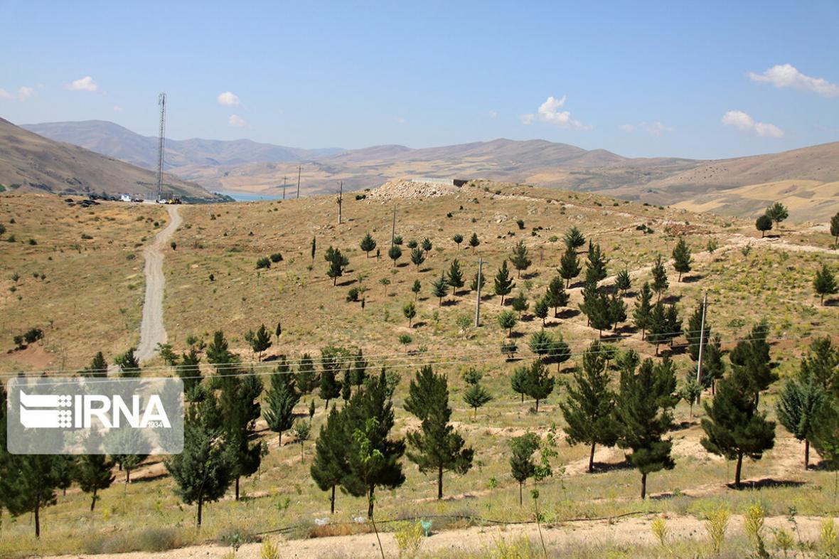 خبرنگاران 70 هزار هکتار جنگل کاری در کشور انجام می شود