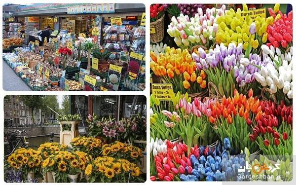 بازار گل زیبا و جذاب بلومن آمستردام
