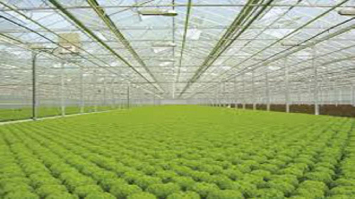 بیش از 200 هکتار مجتمع گلخانه ای در دست ساخت است