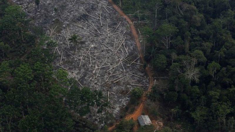 تخریب جنگل های آمازون؛ آسیب به ریه کره زمین