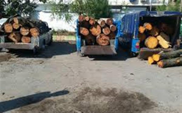افزایش کشفیات قاچاق چوب