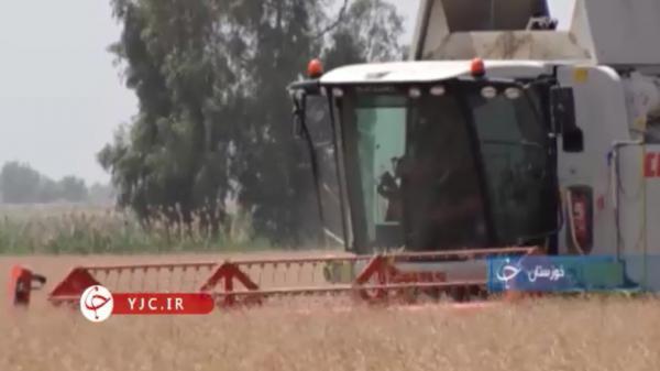 افزایش چشم گیر کشت کلزا در خوزستان